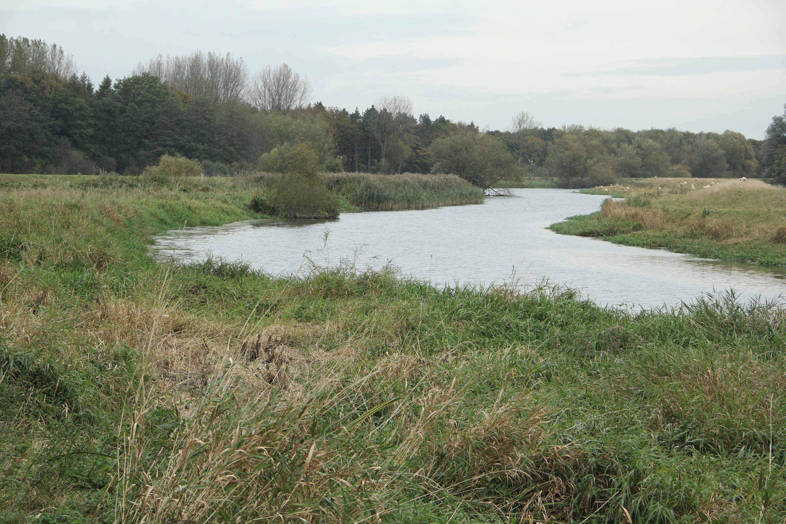 Volunteers worked on improving the natural habitat for birds and otters next to the River Hull